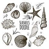 Set of seashells on white background Royalty Free Stock Images