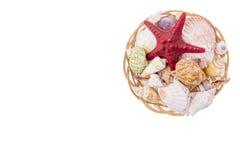 Set of seashells on wicker plate Stock Photo