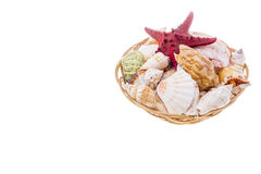 Set of seashells on wicker plate Royalty Free Stock Images