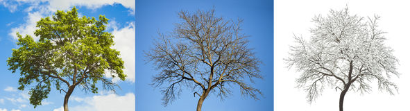 Set of seasonal trees Stock Image