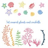 Set of seaweed, coral and shells. Vector illustration royalty free illustration
