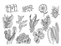 Set of seaweed. Vector image in black and white. Chest vector illustration