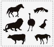 Set of seven animals Royalty Free Stock Photo