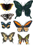 Set of seven different butterflies Stock Photos