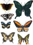 Set of seven different butterflies Stock Photos