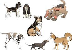 Set of seven dogs - vector Stock Photos