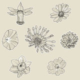 Set of seven graphic flowers Stock Photos