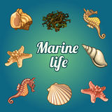 Set of seven shells and sea inhabitants Royalty Free Stock Image
