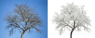 Set sezonowy drzewo zdjęcia stock