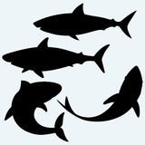 Set shark. Isolated on blue background. Vector silhouettes Royalty Free Stock Image