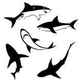Set of Shark. Ocean fish. Vector illustration. Set of Shark. Ocean fish. Vector illustration Royalty Free Stock Image