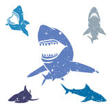 Set of Sharks Royalty Free Stock Image