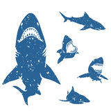 Set of Sharks Stock Photography
