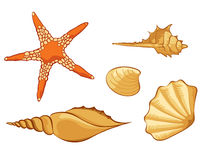 Set of shell Royalty Free Stock Image