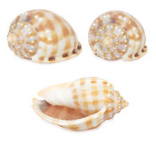 Set of shell Stock Photo