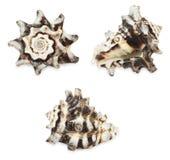 Set of shell Stock Photos