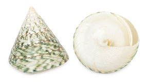 Set of shell Royalty Free Stock Photos