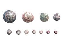 Set of shells. Collection of shells of various size on white background Royalty Free Stock Images