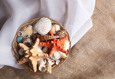 Set shells in a basket on a silk. Fabric Stock Image