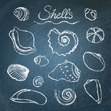 Set of shells on chalkboard Royalty Free Stock Photo
