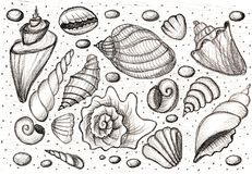 Set shells. Hand drawing pencil. Sketch. Royalty Free Stock Image