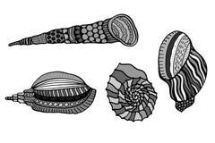 Set of shells. Royalty Free Stock Photos