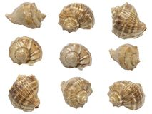 Set of shells of marine molluscs Stock Images