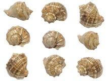 Set of shells of marine molluscs. On white Stock Images