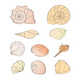 Set of shells Royalty Free Stock Photography