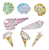 Set of shells Royalty Free Stock Images