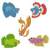 Set of Siamese Fighting Fish royalty free illustration