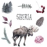 Set of Siberian. Elk, branches of plants. isolated on white background. Watercolor illustration vector illustration
