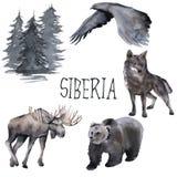 Set of Siberian. Moose, wolf, moon and eagle. isolated on white background. stock illustration