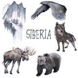 Set of Siberian. Moose, wolf, moon and eagle. isolated on white background. royalty free illustration