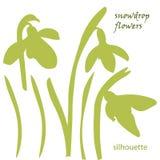 Set silhouette beautiful snowdrop flowers Royalty Free Stock Photos