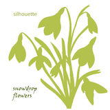 Set silhouette beautiful snowdrop flowers Royalty Free Stock Photography