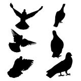 6 set of silhouette birds flying icon. Illustration with pigeon silhouettes isolated on white background Royalty Free Illustration