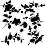 Set silhouette black design plant flower Royalty Free Stock Images