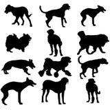 Set silhouette black dog. Vector illustration. Stock Photo