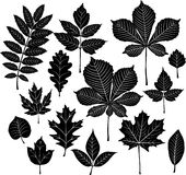 set silhouette för leaf Arkivfoto