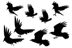 Set of silhouette flying raven bird with leg Stock Photography