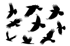 Set of silhouette flying raven bird with no leg. royalty free illustration