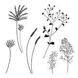 Set of silhouette grass flower, nature vector. Illustration Stock Images