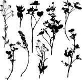 Set of silhouette by herbs and flowers Stock Images