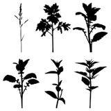 Set silhouette summer grass plants Stock Photography