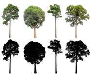 Set Silhouette of trees. stock photo