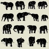 A set of silhouettes of African elephants in various postures vector illustration