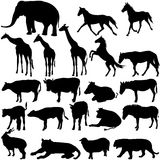 Set  silhouettes animals in zoo collection on a. White background. Vector illustration Stock Images