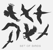Set of silhouettes of birds. Set of illustration of silhouettes of birds Stock Photo