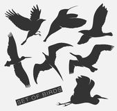 Set of silhouettes of birds. Set of illustration of silhouettes of birds Royalty Free Stock Photos